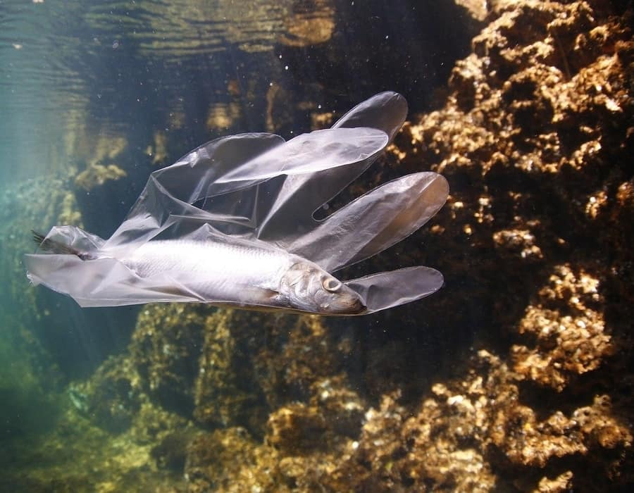 Pronto habrá más plástico que peces en el mar
